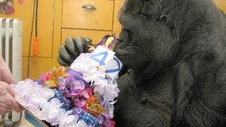 Download Koko's 42nd Birthday (July 4, 2013) Video