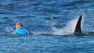 Download Surfista australiano sobrevive a ataque de tiburón Video