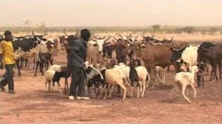Download Crise alimentaire au Mali Video