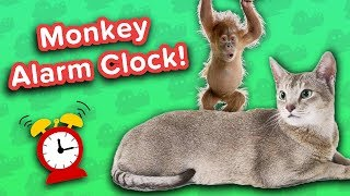 Download Monkey Alarm Clock & Grinning Horses! // Funny Animal Compilation Video