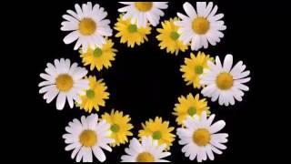 Download Beautiful good morning GIF video Video