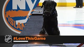 Download Charlie the dog drops ceremonial first puck Video