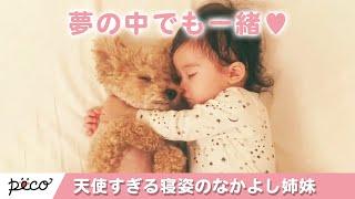 Download 天使すぎる寝姿👼✨ トイプードルと赤ちゃんの仲良し姉妹の日々💕【PECO TV】 Video