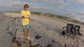 Download VLOG#2 surf fishing! for pompano, whiting and trout!! st george island and st joe state park. Video