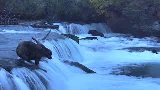 Download Brooks Falls Brown Bears Cam 09-23-2018 21:27:40 - 21:59:50 Video
