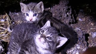 Download 60+ Cats/Kittens Rescued from Farm Hoarding Situation Video