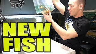 Download RIDICULOUS NEW FISH ORDER Video