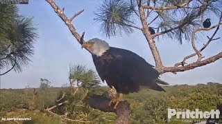 Download SWFL Eagles ~ Looking For E11~ 3.21.18 Video