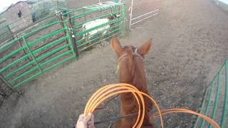 Download Team Roping With GoPro Hero Camera Video