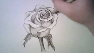 Download Drawing a Rose Video