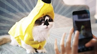 Download Making A Living As An Instagram Cat Video