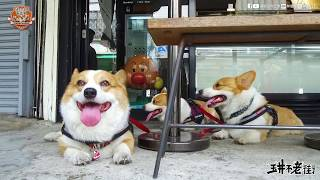 Download [連環泡]玉井老街巡邏犬帶大家導遊老街啦~ Video