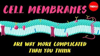 Download Cell membranes are way more complicated than you think - Nazzy Pakpour Video