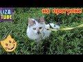 Download Карамелька на прогулке ЦЕЛУЕТСЯ с Сериком Лиза и котики 🌸 LizaTube Video