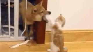Download 알수없는고양이의정신세계 Video