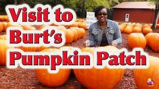 Download Field Trip to the Pumpkin Patch - LittleStoryBug Video