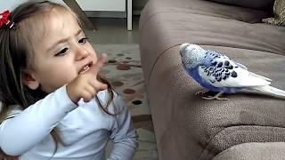 Download Muhabbet Kuşu Ve Minik Kız Mutlaka İzleyin Video