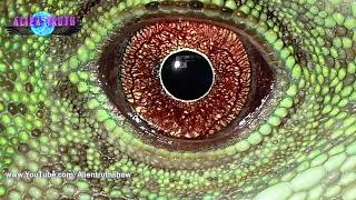 Download Por esto vienen los Extraterrestres... | Alien Truth Video