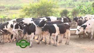 Download Ikiganiro UBUHINZI n'UBWOROZI: Bugesera Video