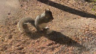 Download Monday April 24th, 2017 Squirrel Feeder Cam and Bird Feeder Cam Video