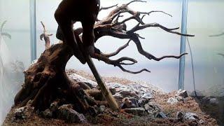 Download membuat bonsai aquascape sederhana dengan akar rasamala/Step by step bonsai rasamala wood Video