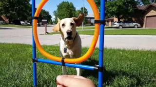 Download My Dogs Love the Dog Agility Training Toy Video