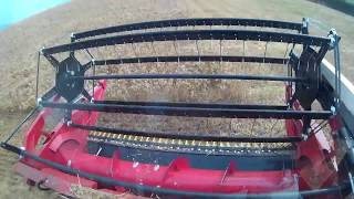 Download Yanmar AG1140R combine harvest barley FPV 얀마 범용콤바인 보리수확 1인칭시점 Video