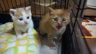 Download 可愛すぎる子猫の成長記録 生後一か月から1歳になるまで Video