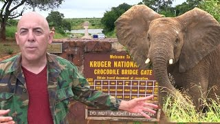 Download A Day in Kruger National Park - Elephants, Giraffes, Hippos, Baboons Video