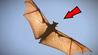 Download 5 Abnormally Large Animals That Really Exist! Video