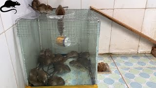 Download Mouse trap with water cans and wire mesh / best way to make homemade mousetrap Video