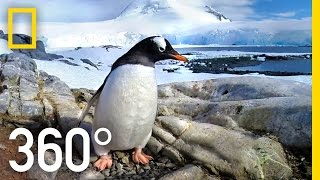 Download 360° Antarctica - Journey Through The Ice | National Geographic Video
