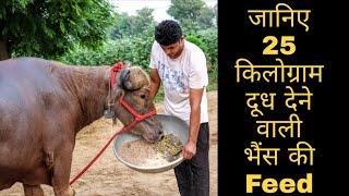 Download जानिए 25 किलोग्राम दूध देने वाली भैंस की Feed || Full Information about Feeding of 25 KG Milk Buri Video