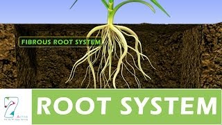 Download ROOT SYSTEM Video