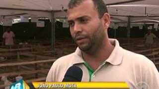 Download Caprinocultura em Laje do Carrapicho- Alagoinha- P Video
