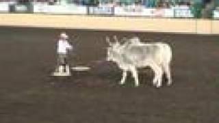 Download Night of the Horse 2008 - Blake Goode Brahma Bulls Video