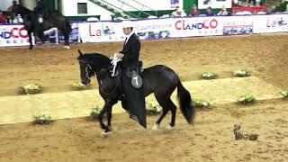 Download RAYUELA DEL ENCANTO, PASO FINO COLOMBIANO COPA ABURRA NORTE GRADO B 2019 Video