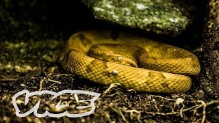 Download Snake Island (Part 2/2) Video