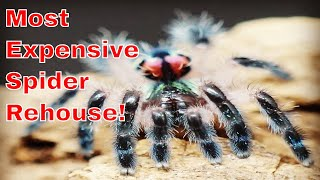 Download A new home for my rarest tarantula + feeding. Video