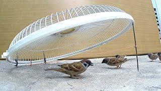 Download Electric fan guard bird trap Video