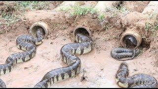 Download Creative Bamboo Deep Hole Snake Trap - Amazing Boys Catch Snake With The Bamboo Hole Snake Trap Video