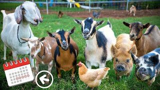 Download Breeding every animal on our farm — we're starting to PANIC! Video