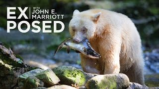 Download EXPOSED Ep. 6: Photographing Spirit Bears in the Great Bear Rainforest Video