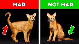 Download If Your Cat Acts Strangely, Don't Worry. Here's the Explanation! Video