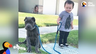 Download 'Aggressive' Pit Bulls LOVE Their Baby Brother   The Dodo Pittie Nation Video