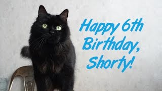 Download Happy 6th Birthday, Shorty! Video