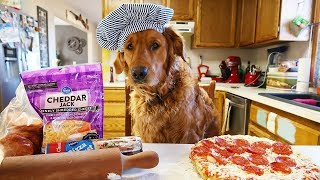 Download Funny Chef Dog Earl Cooks Pizza! Video