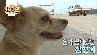 Download 혼자 버스타고 지인 만나러 가는 강아지 Video
