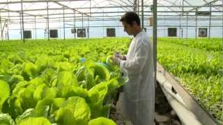 Download Hydroponic lettuce greenhouse factory - Automated Video