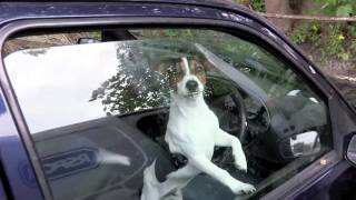 Download RSPCA Video - The Dog Rescuers Episode 4 Video